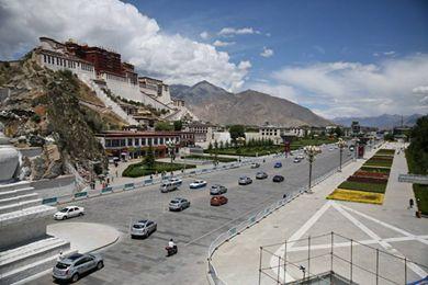 西藏藏红花价格 拉萨藏红花多少钱一克
