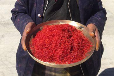 上海援藏助力产业扶贫 结束西藏不产藏红花历史