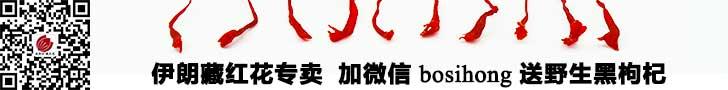 中国藏红花网Banner图