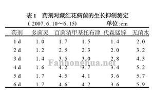 藏红花球茎腐烂病的病原鉴定及药剂预防