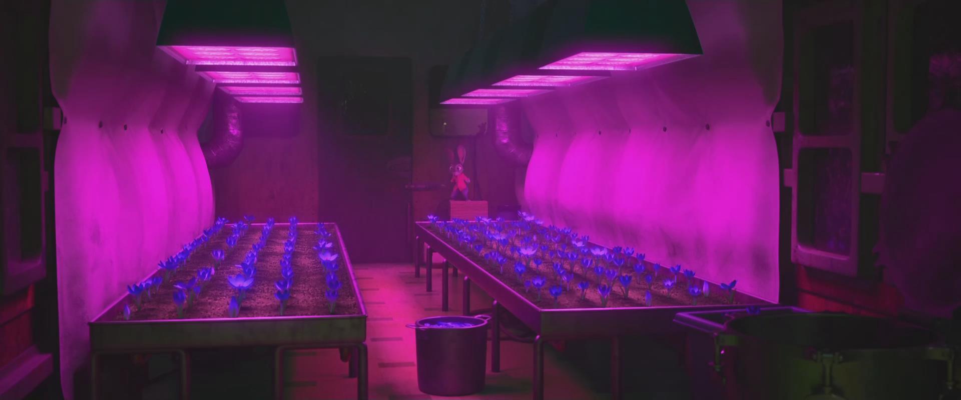 《疯狂动物城》里的蓝紫色番红花