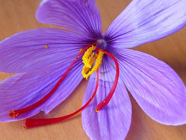 藏红花花瓣