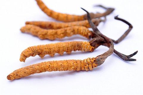 冬虫夏草可以抗衰老吗 冬虫夏草的食疗搭配有哪些