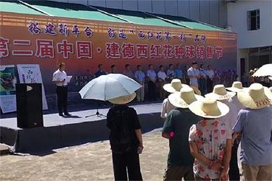"""浙江建德構建多平臺 發揮""""西紅花之鄉""""品牌效應"""