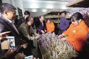 台湾客商到建德考察西红花生产