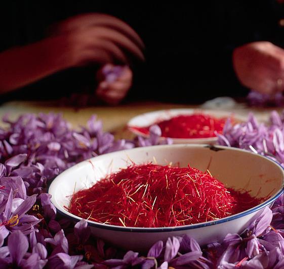 阿爾馬格羅花農剛剛剝取的一碗番紅花