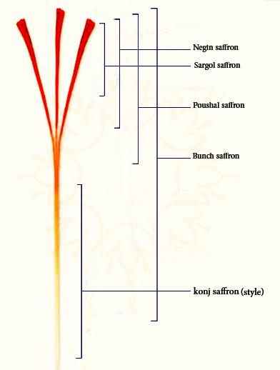 藏紅花等級劃分示意圖