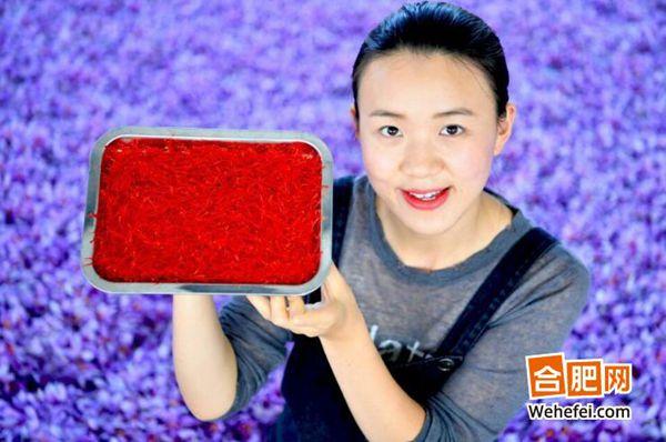 亳州花农刚刚采摘下来的藏红花花丝