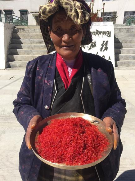 西藏豐收的藏紅花