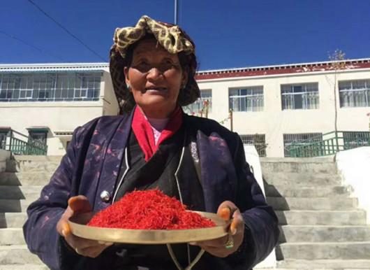 西藏出產的藏紅花