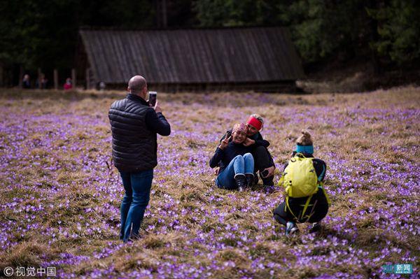 游客和番紅花拍照