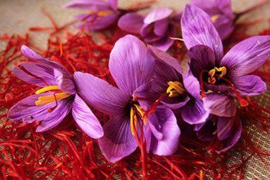 中東料理 扎根于干旱地帶的的香料藏紅花