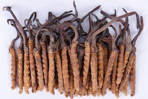 冬虫夏草怎么吃最好 如何吃最好