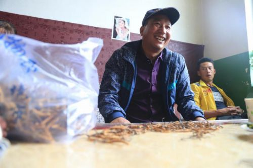 藏民家里收虫草