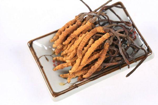 冬虫夏草具有调理呼吸系统疾病的功效