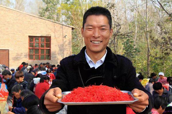 河南永城的藏紅花大豐收