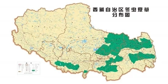 西藏自治區冬蟲夏草分布圖