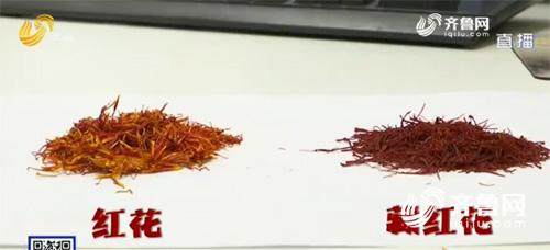 普通红花和藏红花