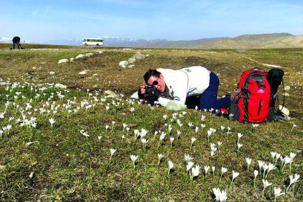 游客在那拉提空中草原拍摄白番红花