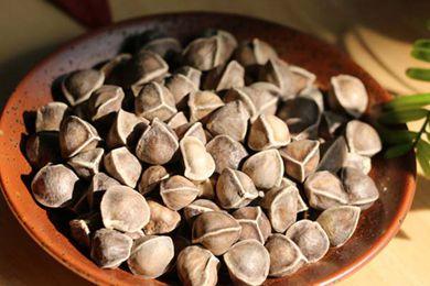 辣木籽能治心脏病吗