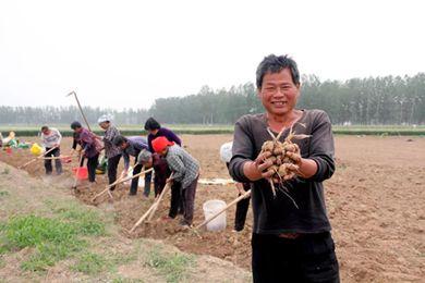 """藏红花种子变身""""金蛋蛋"""",每亩创收超过10万元!"""