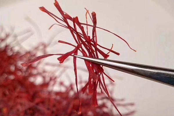 藏红花治心脑血管疾病