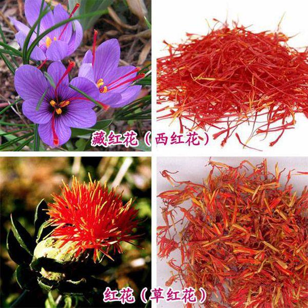 藏红花和草红花的对比图片