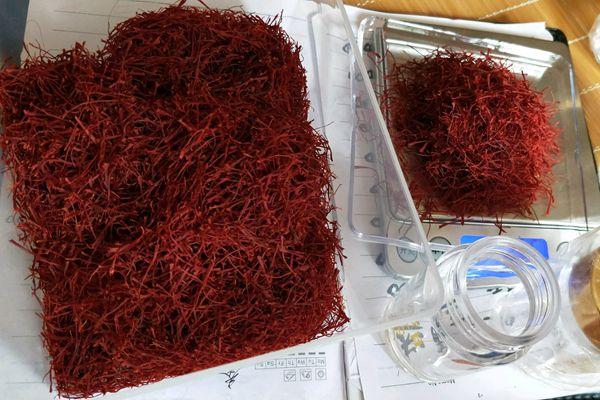 藏红花能治很多疾病