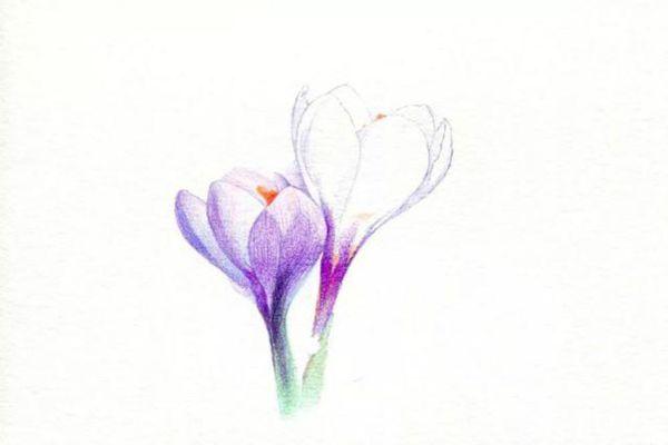 点缀番红花花蕊