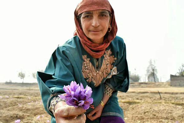 波斯人手拿藏红花和西红花