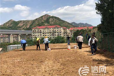 山东青岛崂山区乡村振兴新项目 北宅试种藏红花成功
