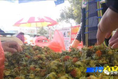 """安徽六安皖西路這個地方有人在賣假""""藏紅花""""!"""