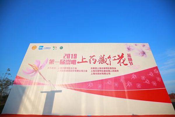 2019第一届上海崇明上药藏红花采摘节