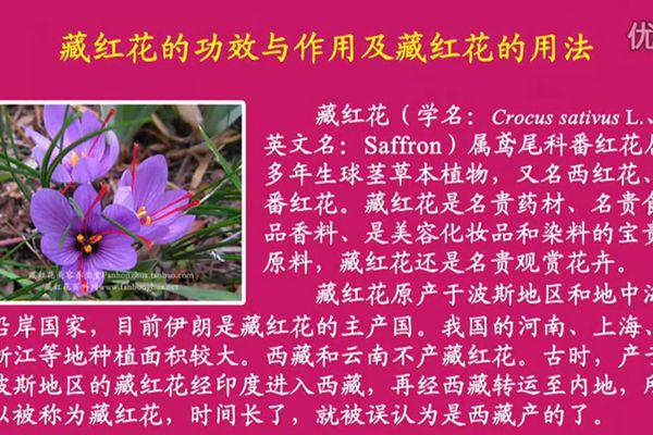 藏红花美容养生堂:藏红花的功效与作用及藏红花的用法