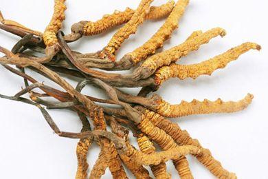 西藏拉萨市当雄县多举措保障虫草采集管理工作顺利开展