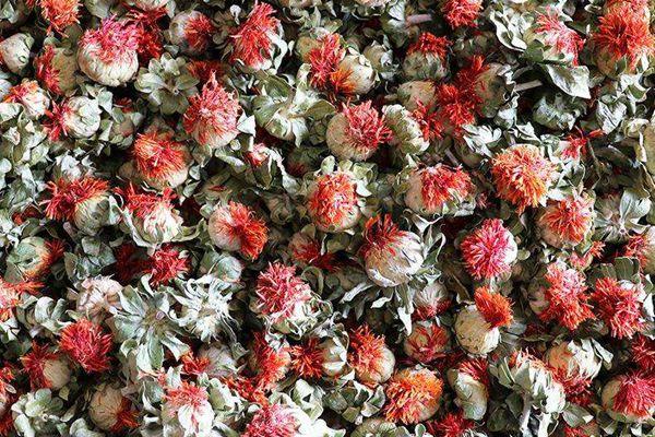 草红花果冒充的假藏红花果