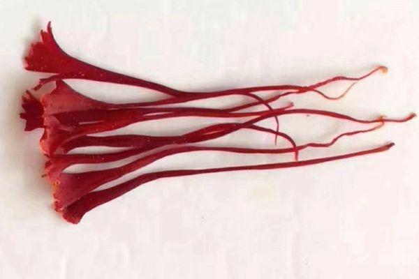 观察法辨别藏红花的真假