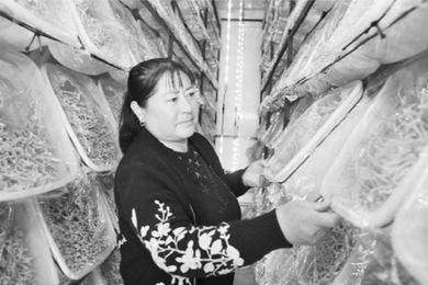 朝阳喀左县双庙村:小虫草 大产业