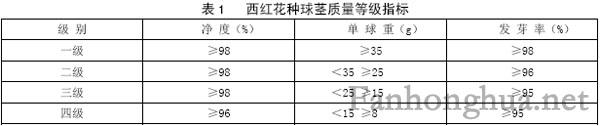 西紅花種球莖質量等級指標