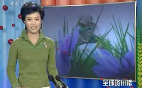 藏红花调料全球最贵视频截图