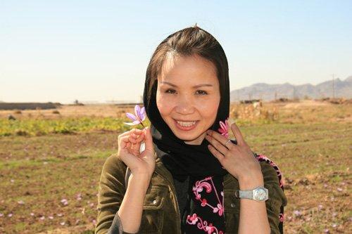 作者張淑惠采摘的藏紅花