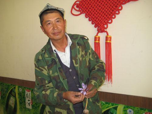 新疆成功引种藏红花