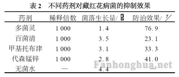 表2 不同藥劑對藏紅花病菌的抑制效果