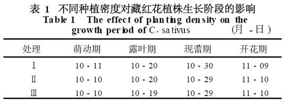 表1 不同種植密度對藏紅花植株生長階段的影響