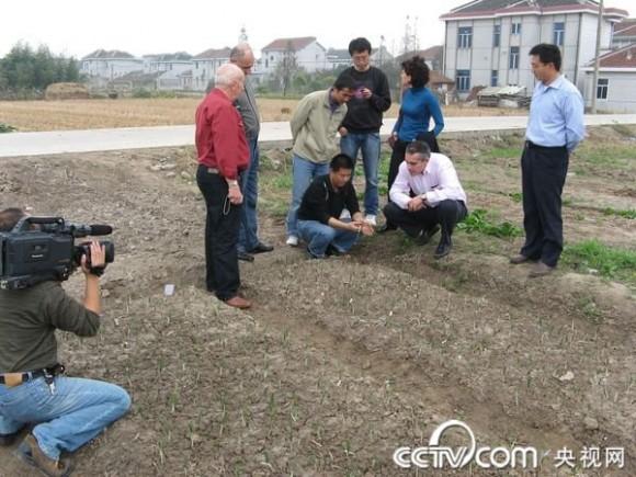 西班牙客商參觀了位于上海崇明島上的藏紅花產地