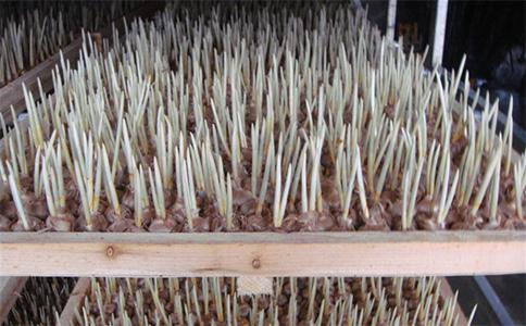 平水镇的村民成片种植西红花