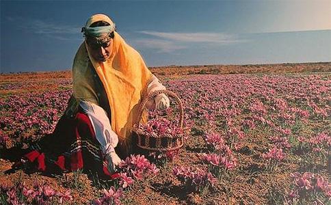 采摘藏紅花