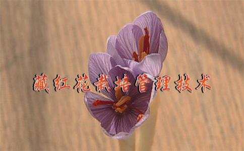 CCTV-7農廣天地:藏紅花栽培管理技術