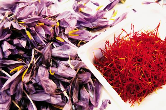 每公斤藏红花朵仅能出10克上等藏红花 得之不易