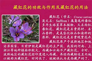 藏紅花美容養生堂:藏紅花的功效與作用及藏紅花的用法